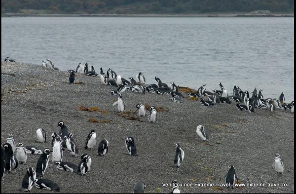 rezervatie de pinguini
