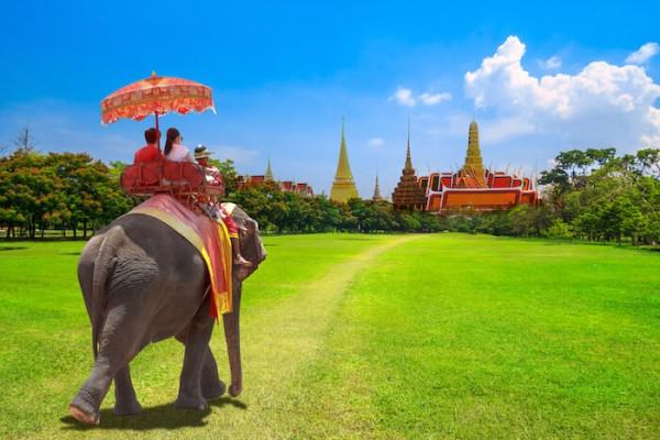 tabara de elefanti